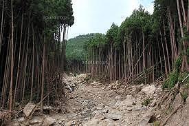 荒廃した森林の画像